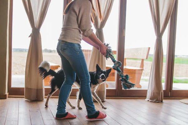 giocare con il cane in casa