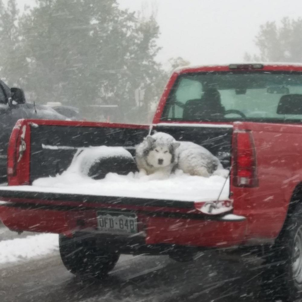 La foto del cane sul pick-up mentre nevica scatena la reazione del web