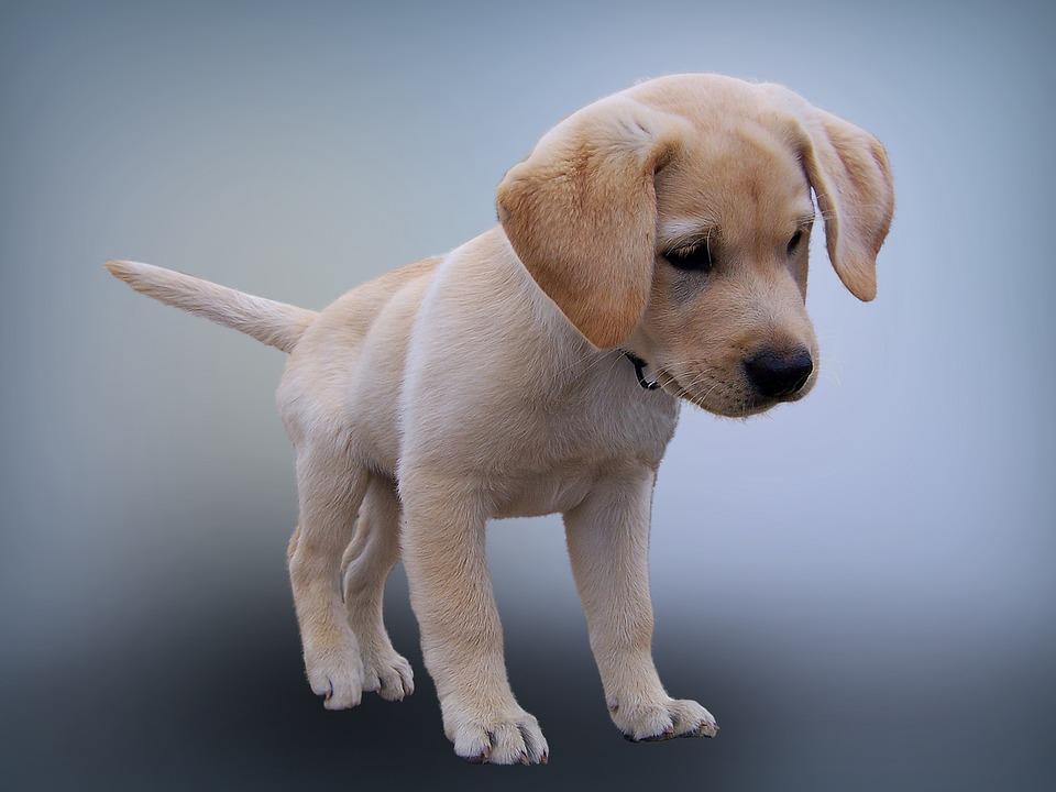 I cani possono essere confusi? Come possiamo capirlo?