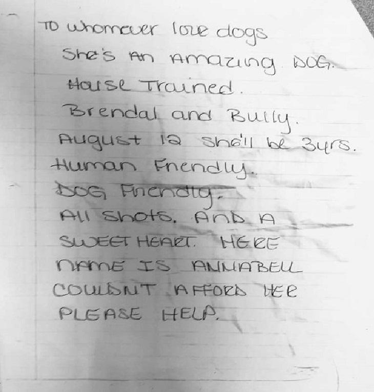 Il cane viene trovato legato ad un albero, i soccorritori notano una lettera