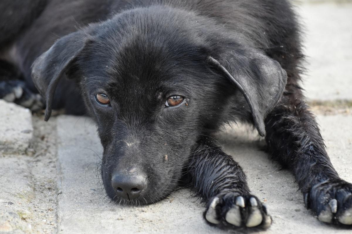 cucciolo di colore nero