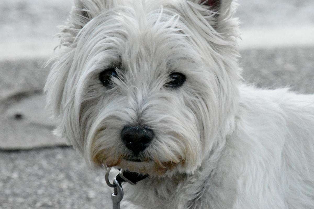 cane bianco e piccolo