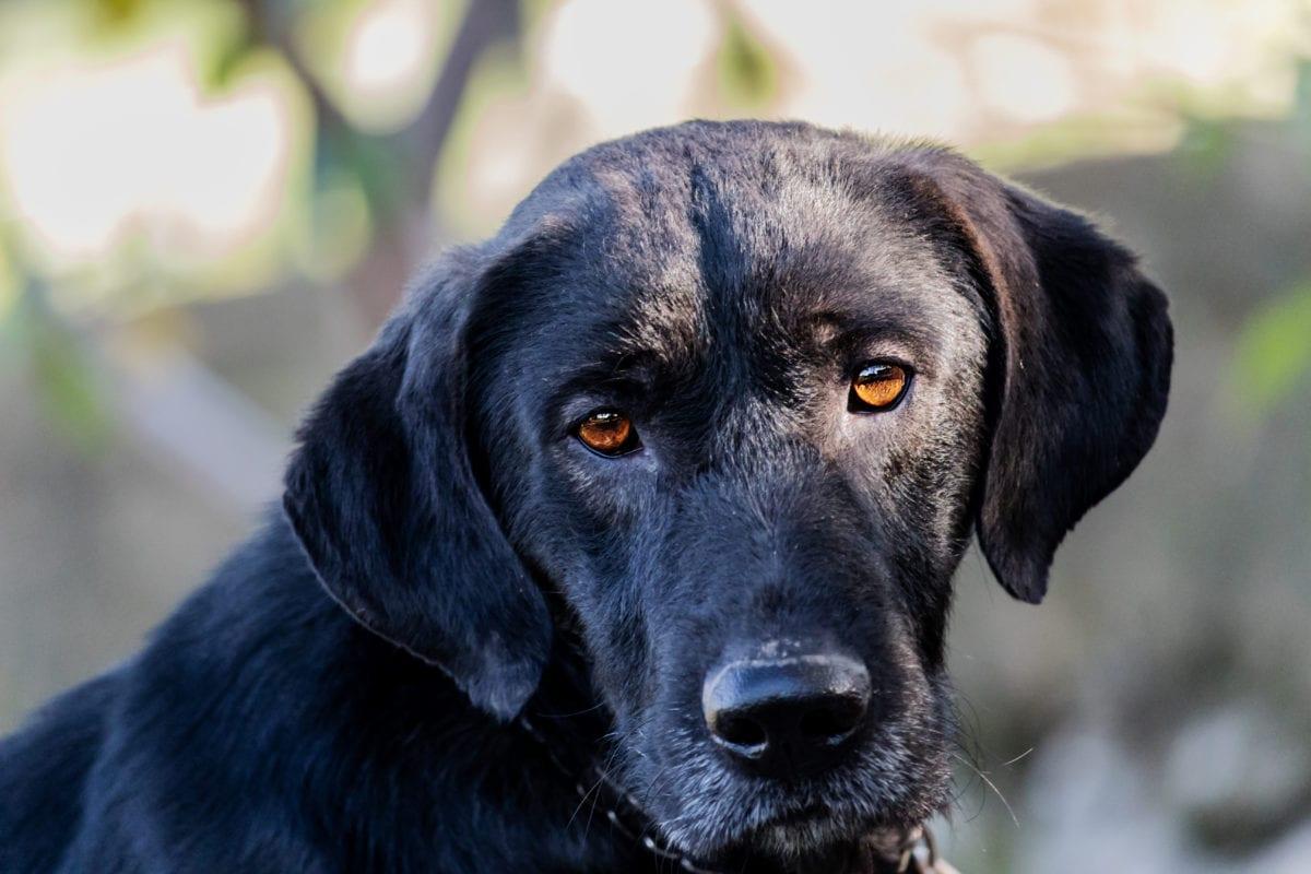 Avvelenamento da naftalina nel cane, cosa bisogna fare