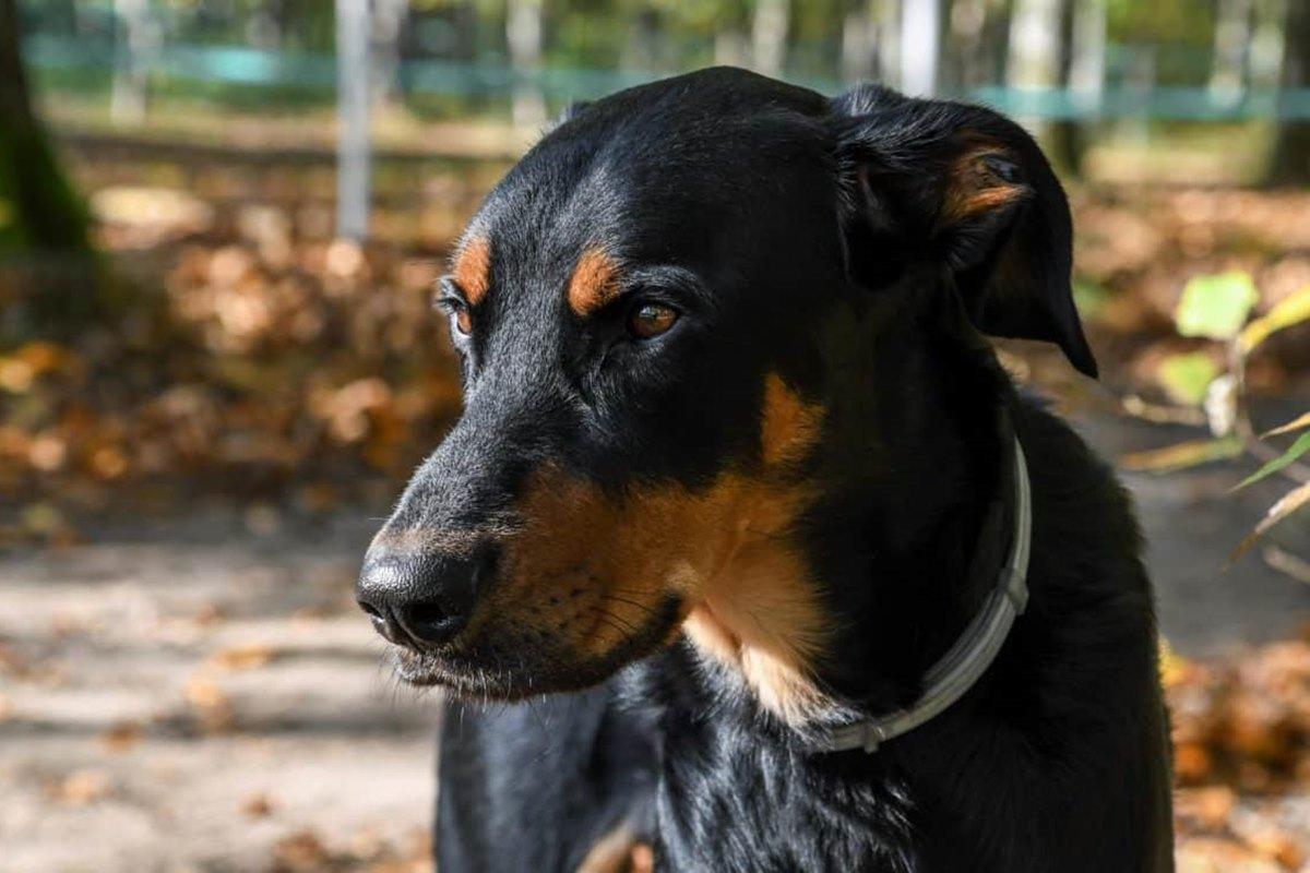 cane con il mantello nero focato