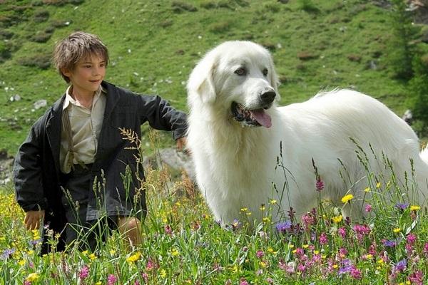 cane belle e sebastien in montagna