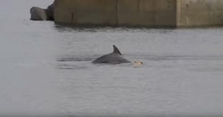 ben-delfino