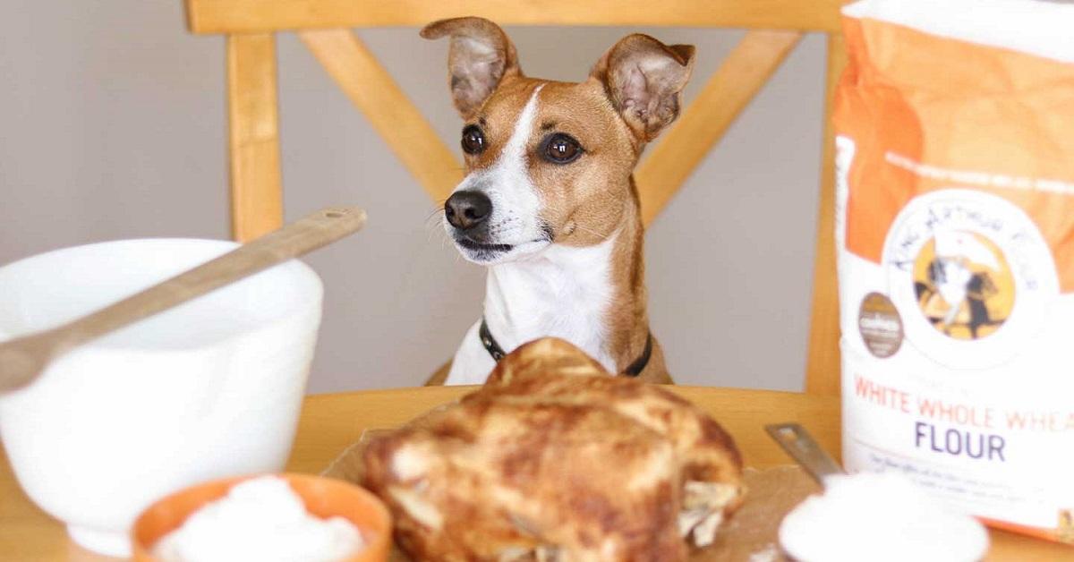 cane davanti a ingredienti per biscotti