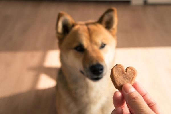 cane guarda biscotto a cuore