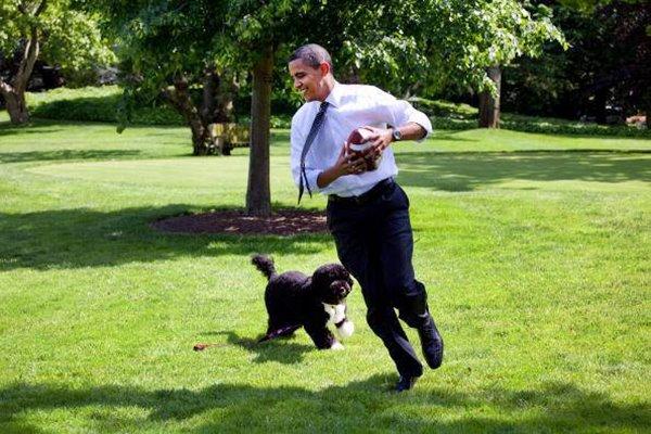 obama gioca con bo