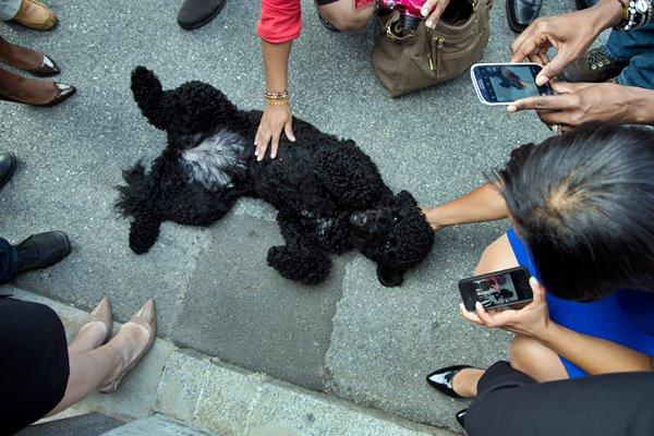 cane e fotografie
