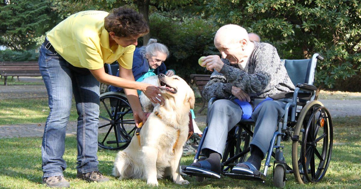cane cammina accanto la sedia a rotelle