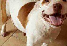 cane-sfruttato-da-alla-vita-per-lultima-volta-8-bellissimi-cuccioli
