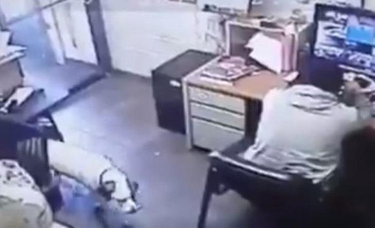 cane-uomo-telecamere