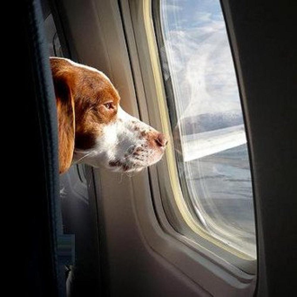 cani-aereo