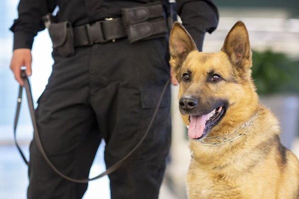 cane e poliziotto