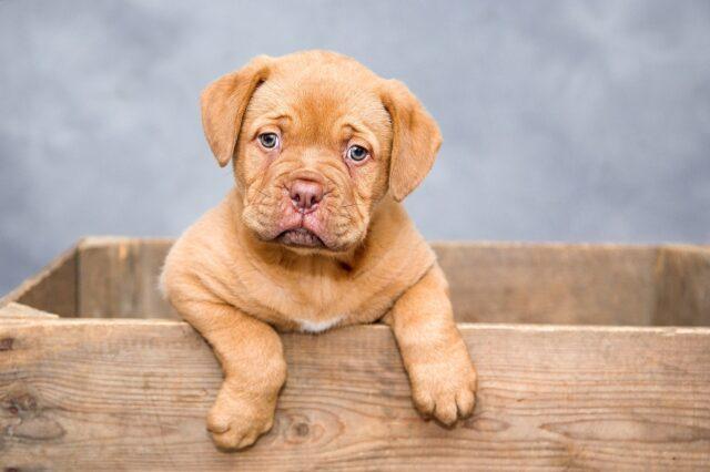 cucciolo di cane dentro ad una scatola di legno