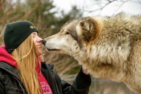 lupo e ragazza