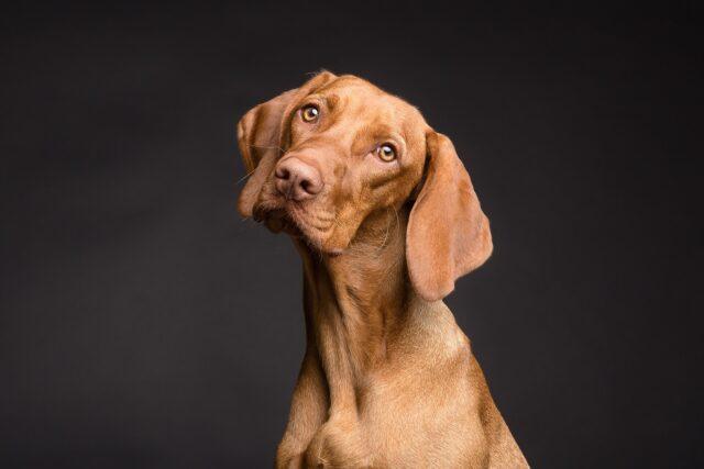 cane con faccia perplessa