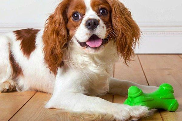 cane e giocattolo