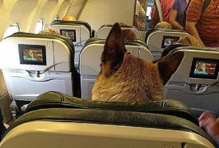 cani-compagnia-aerea