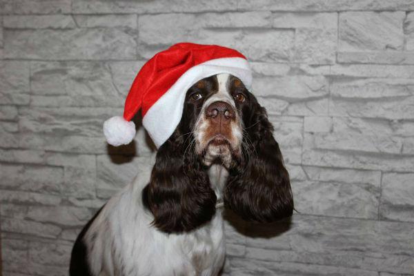 Cani e ospiti a Natale: tutti i modi per far stare tranquillo Fido