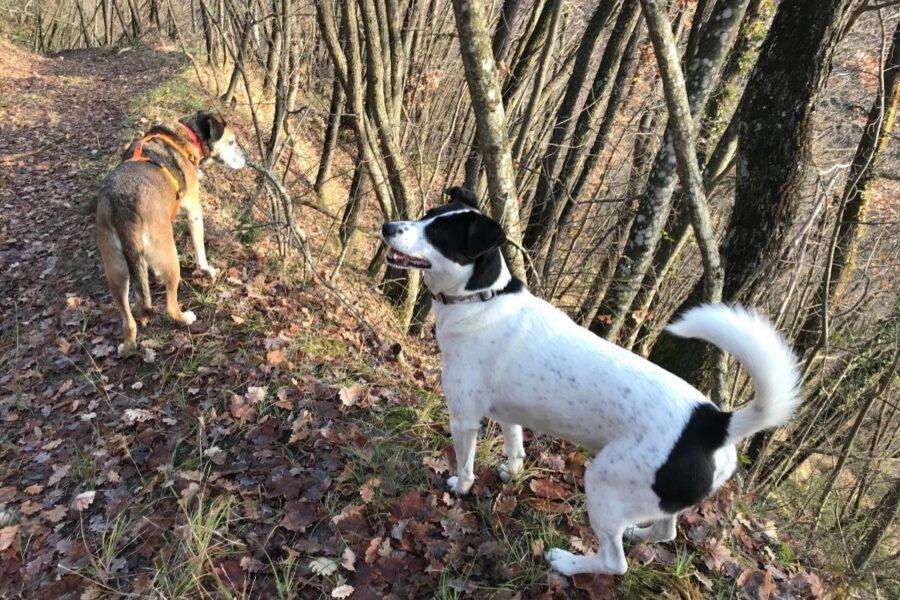 cani fra gli alberi