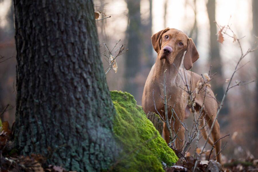 cane vicino a un albero