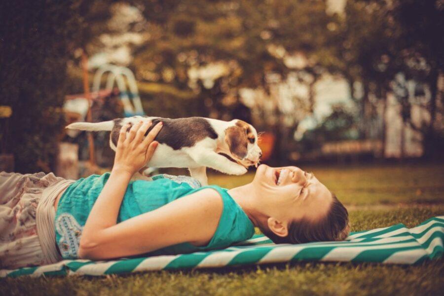 cucciolo di cane gioca con padrona
