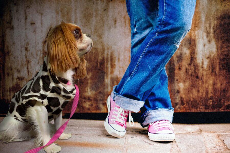 cane con il vestitino
