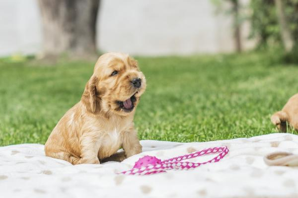 cucciolo di cane con tosse