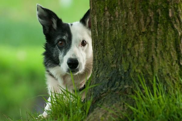 cane dietro albero
