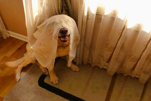 cane dietro tenda