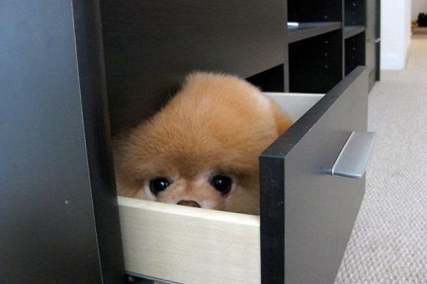 cane dentro cassetto