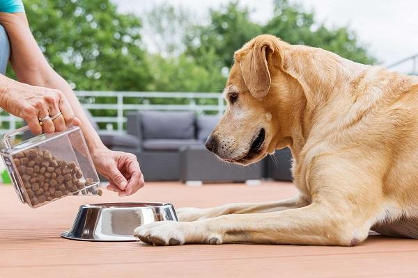 cane che aspetta di mangiare croccantini