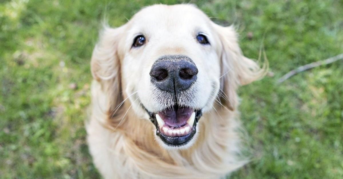 cane con l'espressione felice
