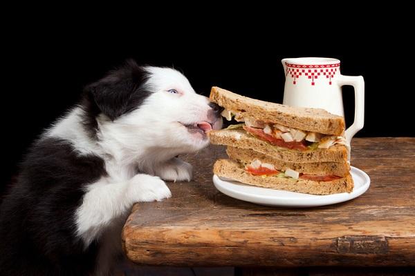 cane che ruba da tavola