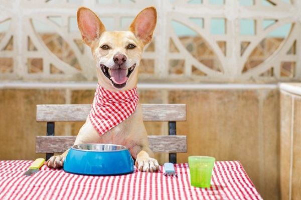 cane a tavola pronto per mangiare