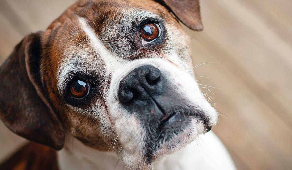 I cani possono mangiare il baccalà?