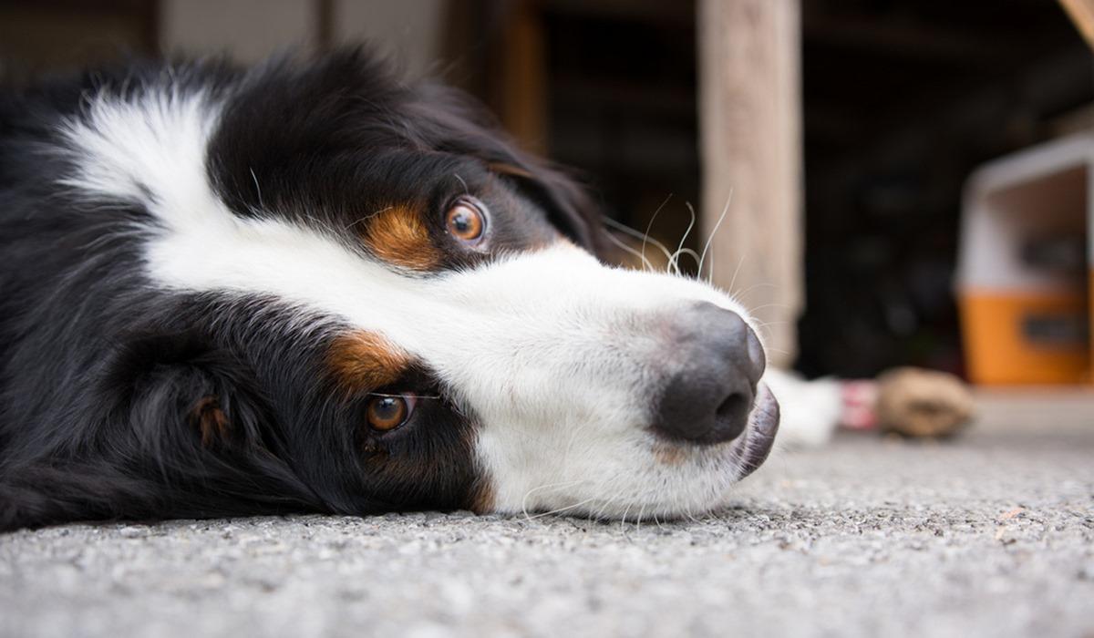 I cani possono mangiare il buccellato?