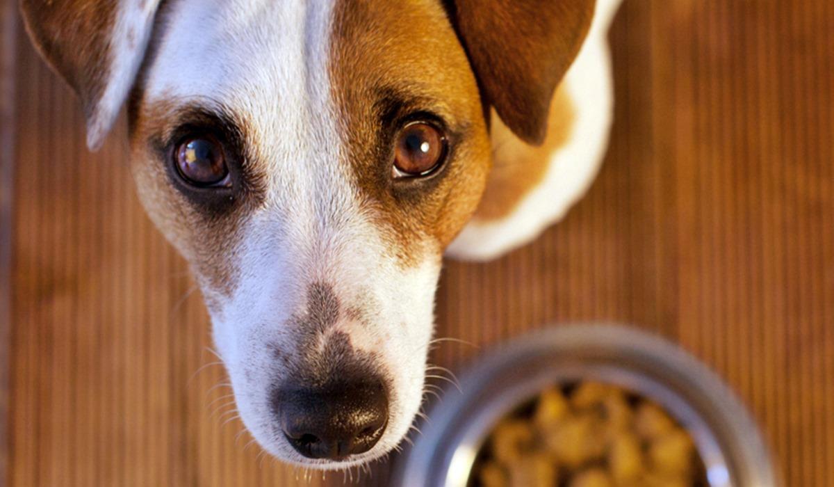 I cani possono mangiare il capitone?