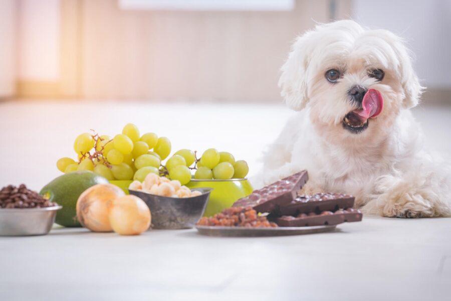 cane davanti alla frutta