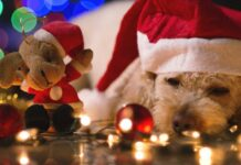 indigestione cane a natale