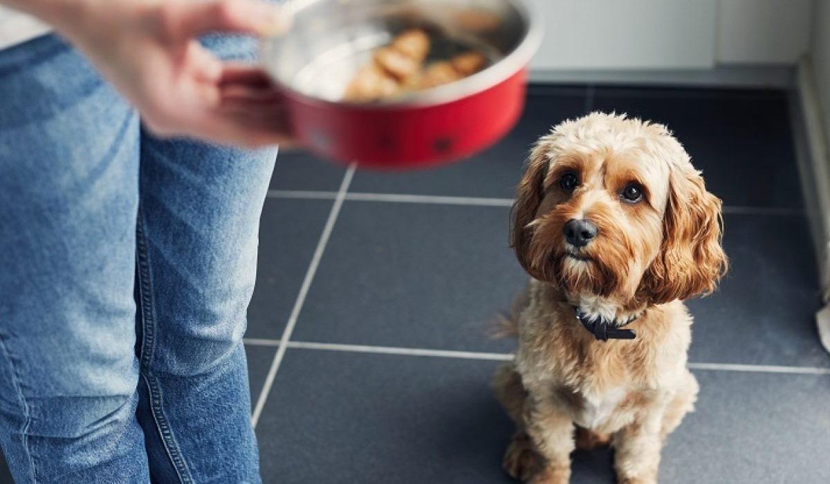 I cani possono mangiare il panforte?