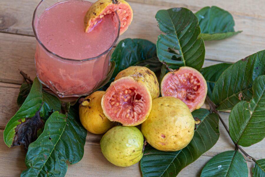 guava per cani