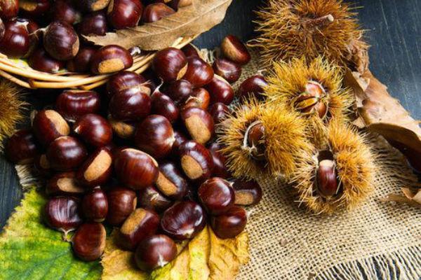 I cani possono mangiare le castagne?