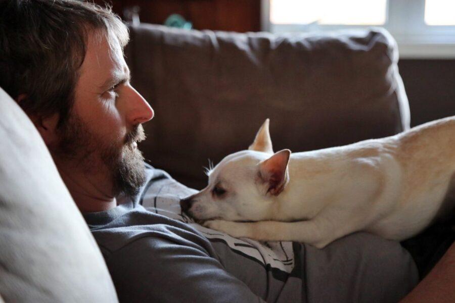 cane riposa sul padrone