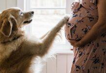 cane tocca il pancione della mamma