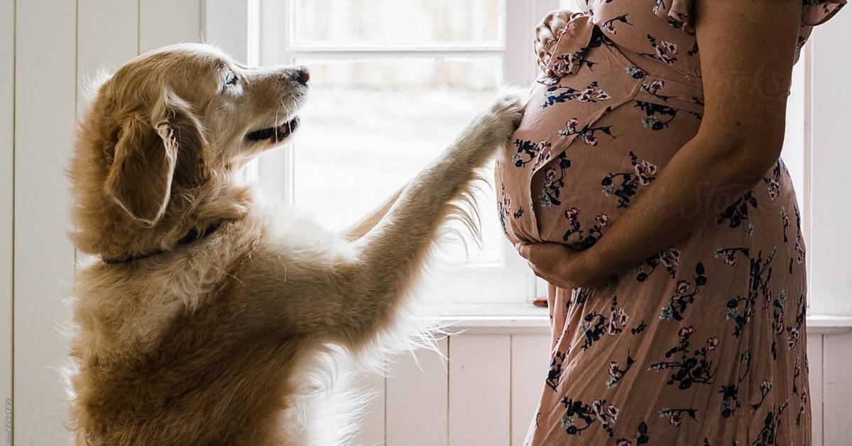 i cani sentono il battito cardiaco di un bambino non ancora nato