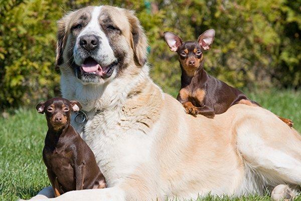 cane grande con cani piccoli