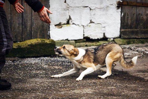cane ha paura delle persone